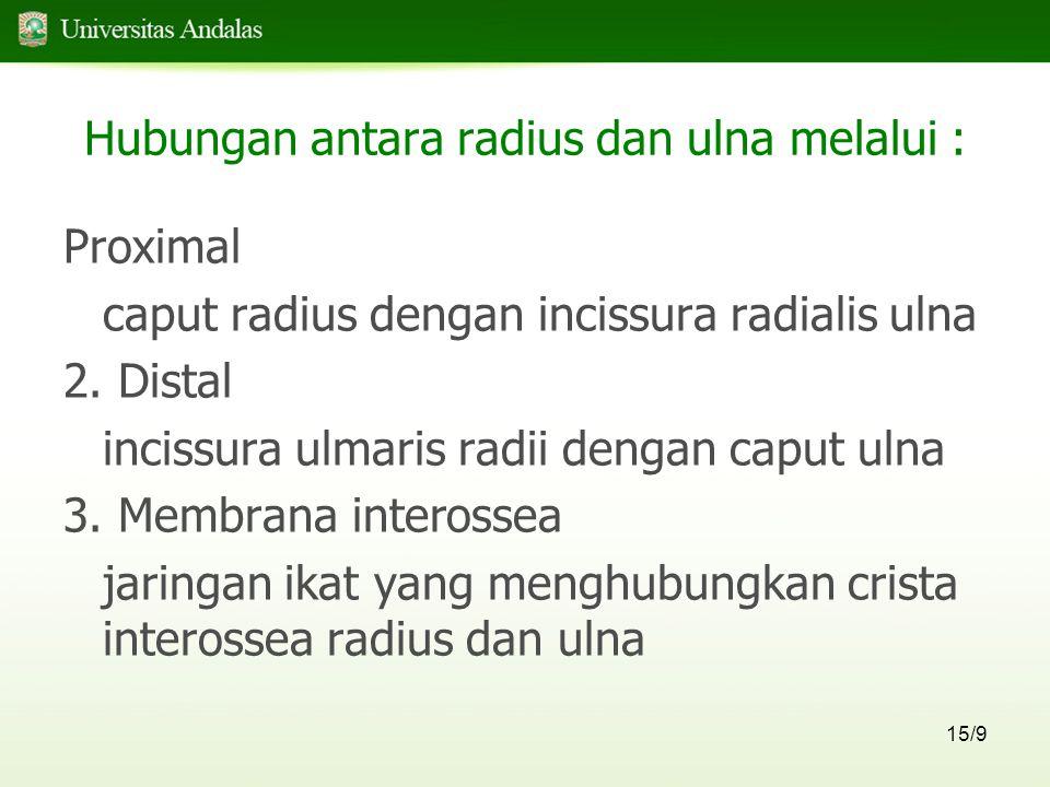 15/9 Hubungan antara radius dan ulna melalui : Proximal caput radius dengan incissura radialis ulna 2.
