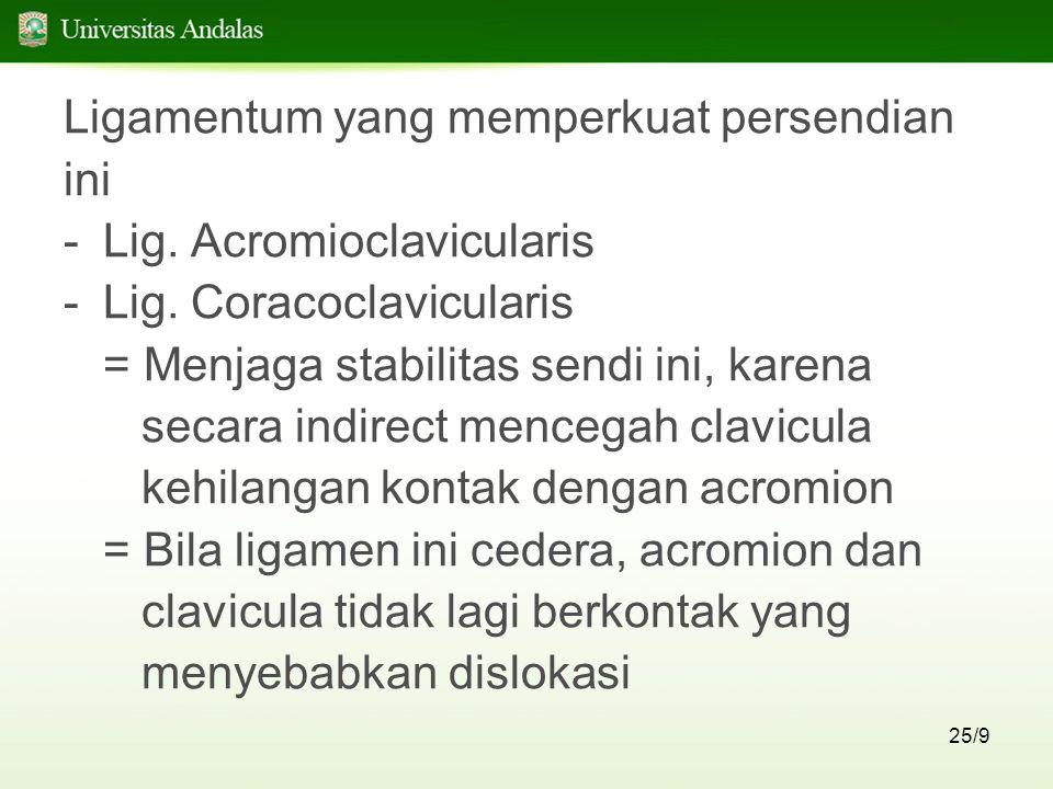 25/9 Ligamentum yang memperkuat persendian ini -Lig. Acromioclavicularis -Lig. Coracoclavicularis = Menjaga stabilitas sendi ini, karena secara indire