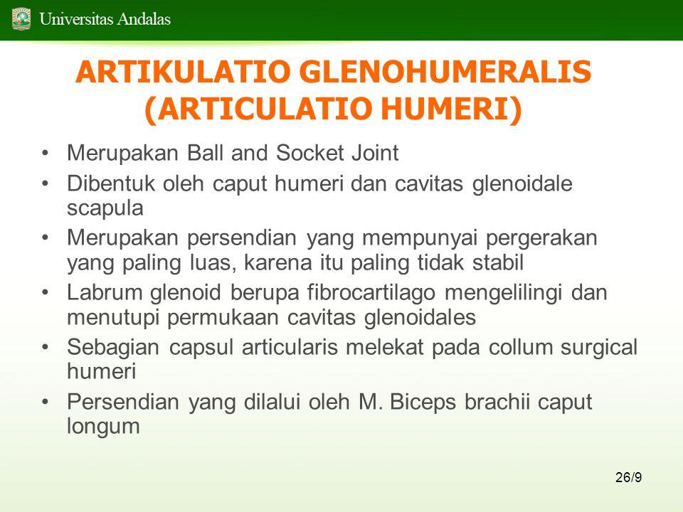 26/9 ARTIKULATIO GLENOHUMERALIS (ARTICULATIO HUMERI) Merupakan Ball and Socket Joint Dibentuk oleh caput humeri dan cavitas glenoidale scapula Merupakan persendian yang mempunyai pergerakan yang paling luas, karena itu paling tidak stabil Labrum glenoid berupa fibrocartilago mengelilingi dan menutupi permukaan cavitas glenoidales Sebagian capsul articularis melekat pada collum surgical humeri Persendian yang dilalui oleh M.