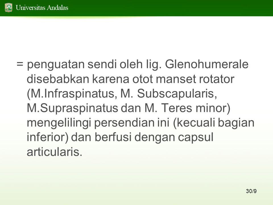 30/9 = penguatan sendi oleh lig. Glenohumerale disebabkan karena otot manset rotator (M.Infraspinatus, M. Subscapularis, M.Supraspinatus dan M. Teres