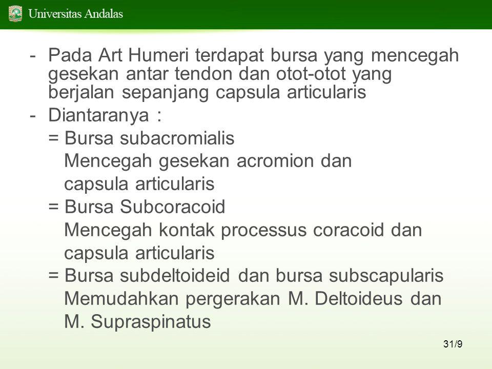 31/9 -Pada Art Humeri terdapat bursa yang mencegah gesekan antar tendon dan otot-otot yang berjalan sepanjang capsula articularis -Diantaranya : = Bur