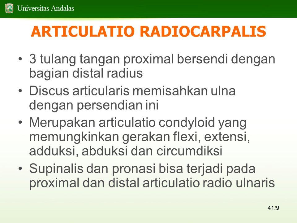 41/9 ARTICULATIO RADIOCARPALIS 3 tulang tangan proximal bersendi dengan bagian distal radius Discus articularis memisahkan ulna dengan persendian ini Merupakan articulatio condyloid yang memungkinkan gerakan flexi, extensi, adduksi, abduksi dan circumdiksi Supinalis dan pronasi bisa terjadi pada proximal dan distal articulatio radio ulnaris
