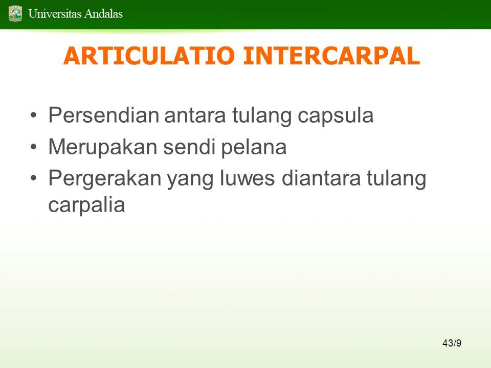 43/9 ARTICULATIO INTERCARPAL Persendian antara tulang capsula Merupakan sendi pelana Pergerakan yang luwes diantara tulang carpalia