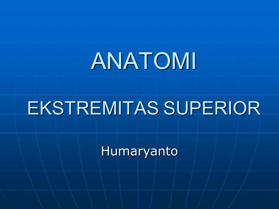 ANATOMI EKSTREMITAS SUPERIOR Humaryanto