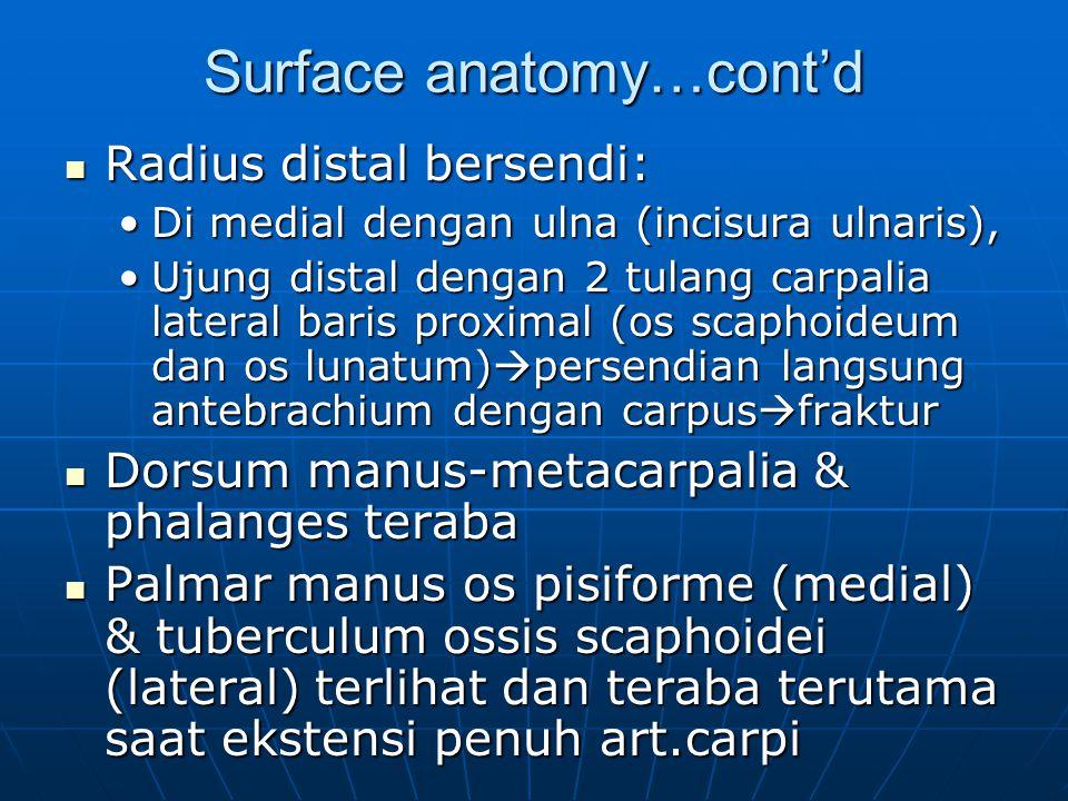 Surface anatomy…cont'd Radius distal bersendi: Radius distal bersendi: Di medial dengan ulna (incisura ulnaris),Di medial dengan ulna (incisura ulnari
