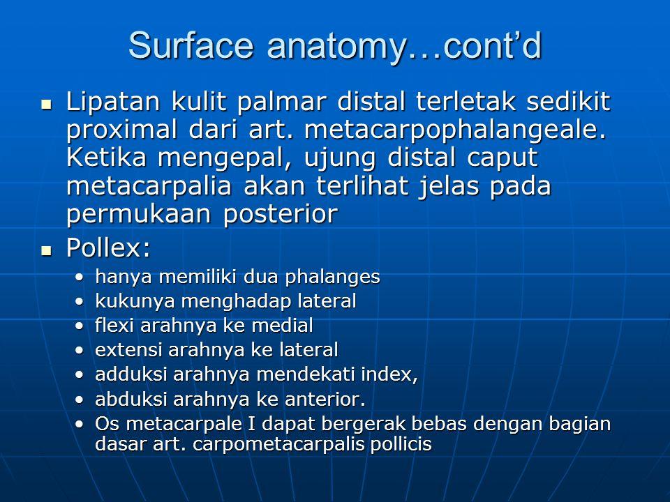 Surface anatomy…cont'd Lipatan kulit palmar distal terletak sedikit proximal dari art. metacarpophalangeale. Ketika mengepal, ujung distal caput metac
