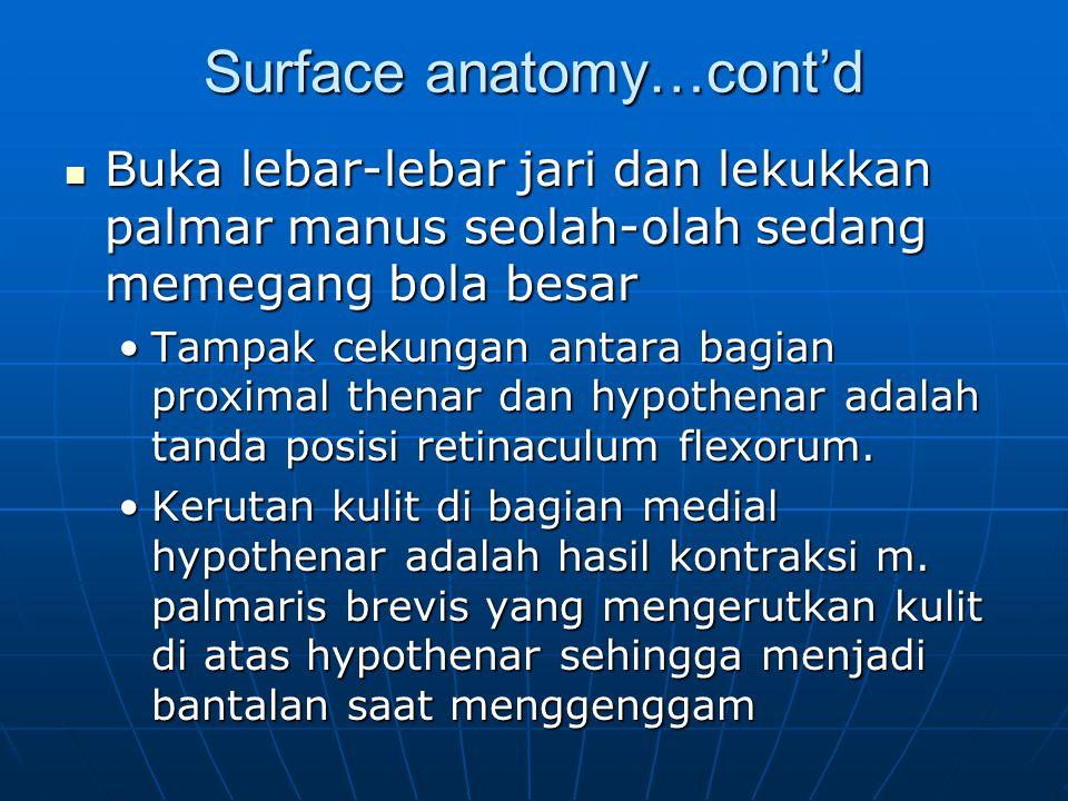 Surface anatomy…cont'd Buka lebar-lebar jari dan lekukkan palmar manus seolah-olah sedang memegang bola besar Buka lebar-lebar jari dan lekukkan palma