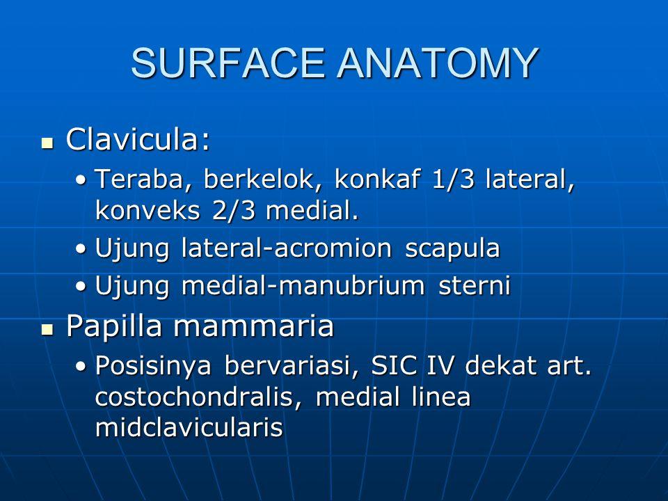 SURFACE ANATOMY Clavicula: Clavicula: Teraba, berkelok, konkaf 1/3 lateral, konveks 2/3 medial.Teraba, berkelok, konkaf 1/3 lateral, konveks 2/3 media