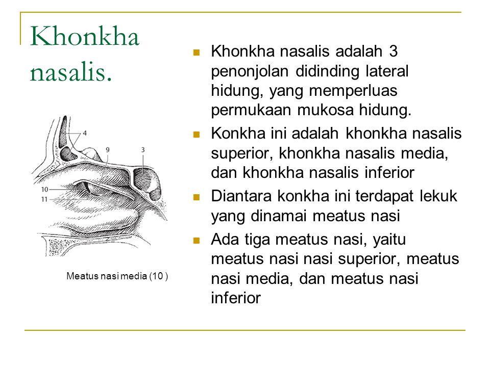 Khonkha nasalis.