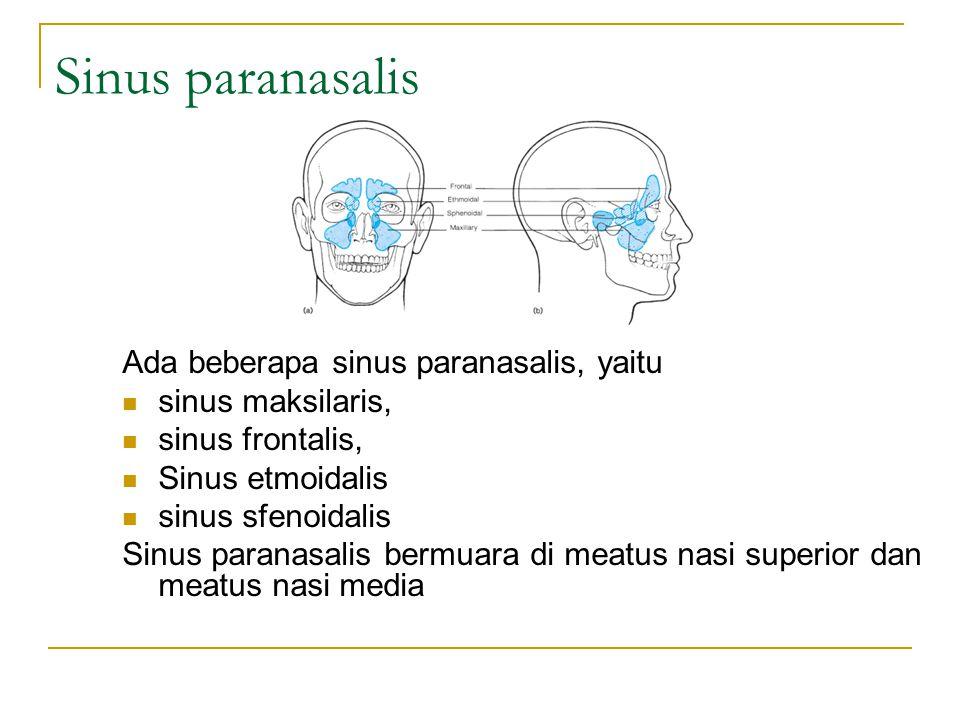 Sinus paranasalis Ada beberapa sinus paranasalis, yaitu sinus maksilaris, sinus frontalis, Sinus etmoidalis sinus sfenoidalis Sinus paranasalis bermuara di meatus nasi superior dan meatus nasi media