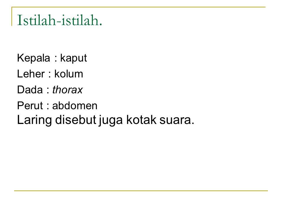 Meatus nasi inferior dan saluran air mata.