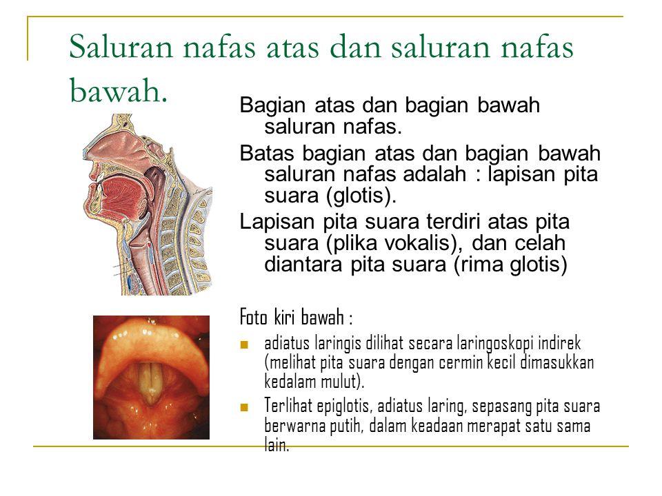 Bagian-bagian saluran nafas atas : Hidung (nasus) Kerongkongan (farink) Tenggorokan atas (larink bagian atas) Pembuluh darah Saraf Saluran getah bening