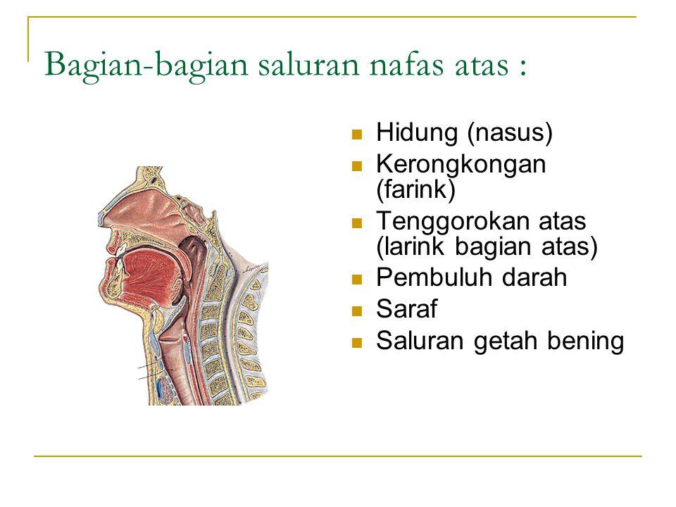 Adiatus laringis dan glotis. Epiglotis Rima glotis Glotis Trakhea Kartilago aritenoid