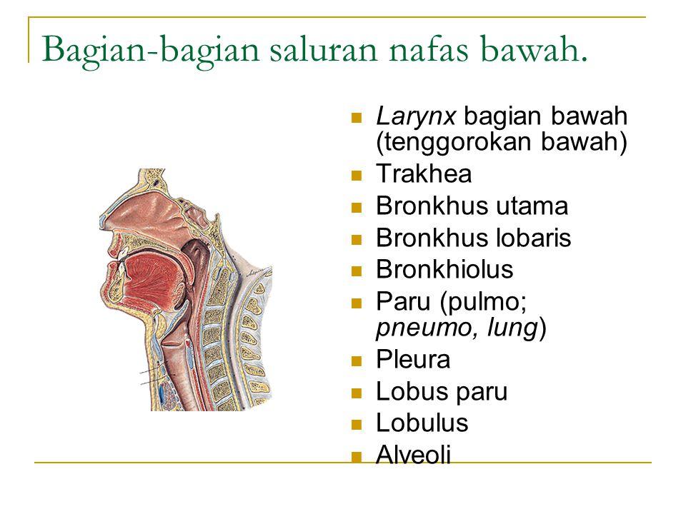 Hidung (nasus) dan bagian-bagiannya : Nares anterior, vestibulum, septum nasi, konkha nasalis, sinus paranasalis dan dinding rongga hidung Hidung: dikelilingi oleh kulit, rawan, mukosa, dan beberapa tulang.