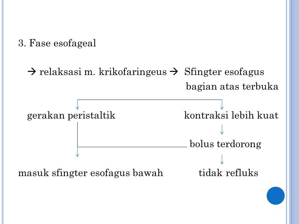 3. Fase esofageal  relaksasi m. krikofaringeus  Sfingter esofagus bagian atas terbuka gerakan peristaltik kontraksi lebih kuat bolus terdorong masuk