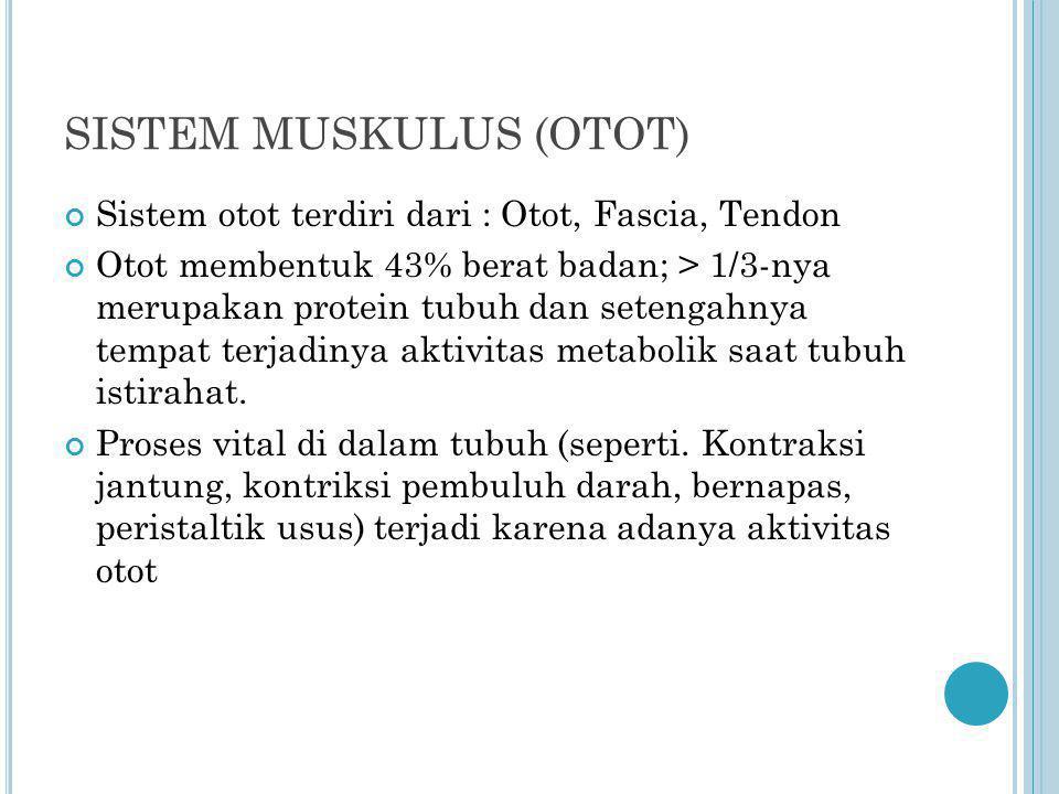 SISTEM MUSKULUS (OTOT) Sistem otot terdiri dari : Otot, Fascia, Tendon Otot membentuk 43% berat badan; > 1/3-nya merupakan protein tubuh dan setengahn