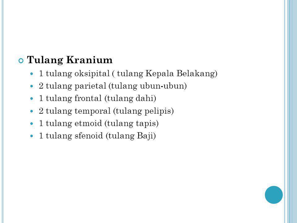 Tulang Kranium 1 tulang oksipital ( tulang Kepala Belakang) 2 tulang parietal (tulang ubun-ubun) 1 tulang frontal (tulang dahi) 2 tulang temporal (tul