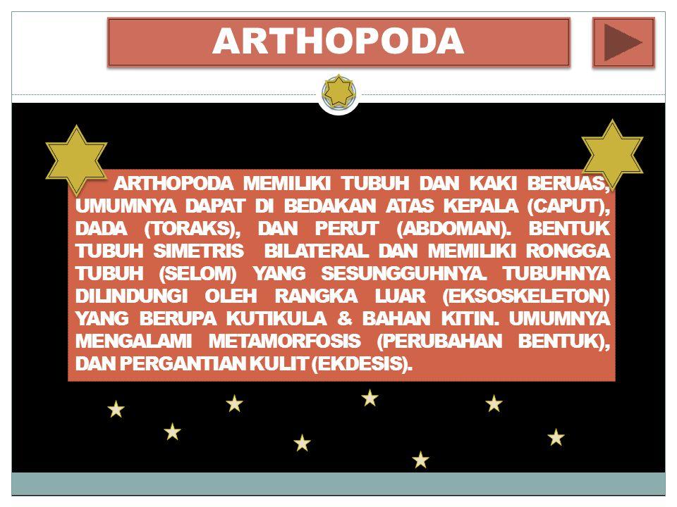 ARTHOPODA ARTHOPODA MEMILIKI TUBUH DAN KAKI BERUAS, UMUMNYA DAPAT DI BEDAKAN ATAS KEPALA (CAPUT), DADA (TORAKS), DAN PERUT (ABDOMAN).