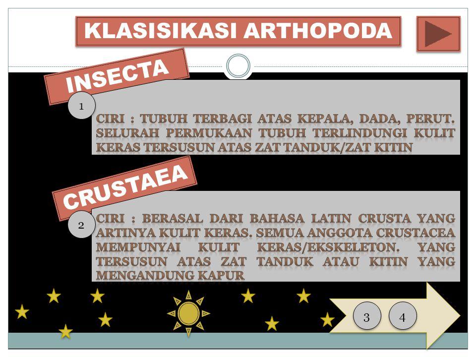 CRUSTAEA INSECTA KLASISIKASI ARTHOPODA 1 1 2 2 3 3 4 4