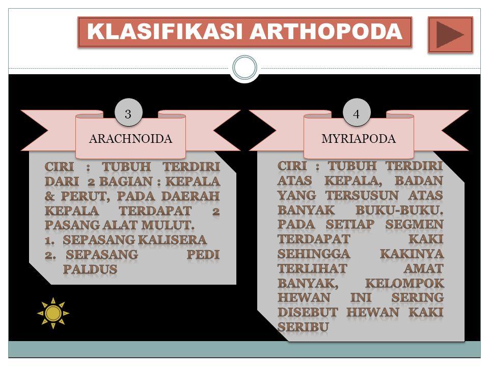 KLASIFIKASI ARTHOPODA ARACHNOIDA MYRIAPODA 3 3 4 4