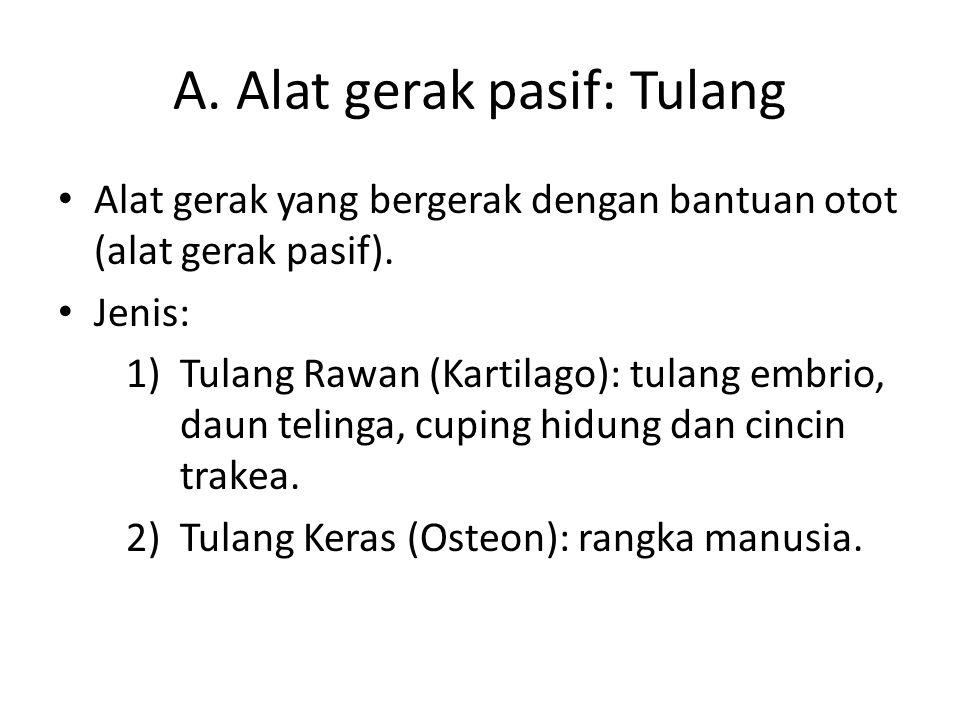 A. Alat gerak pasif: Tulang Alat gerak yang bergerak dengan bantuan otot (alat gerak pasif). Jenis: 1)Tulang Rawan (Kartilago): tulang embrio, daun te