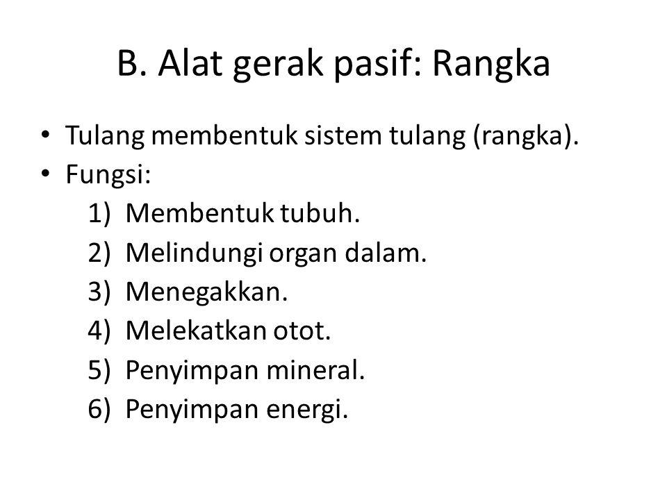 B. Alat gerak pasif: Rangka Tulang membentuk sistem tulang (rangka). Fungsi: 1)Membentuk tubuh. 2)Melindungi organ dalam. 3)Menegakkan. 4)Melekatkan o