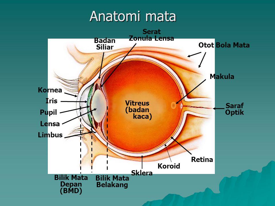 Anatomi Mata Segmen anterior KantusMedial Kantus Lateral Saluran Keluar Air Mata Kornea Limbus Konjungtiva Pupil Iris Karunkula Kelopak Mata Atas Kelo