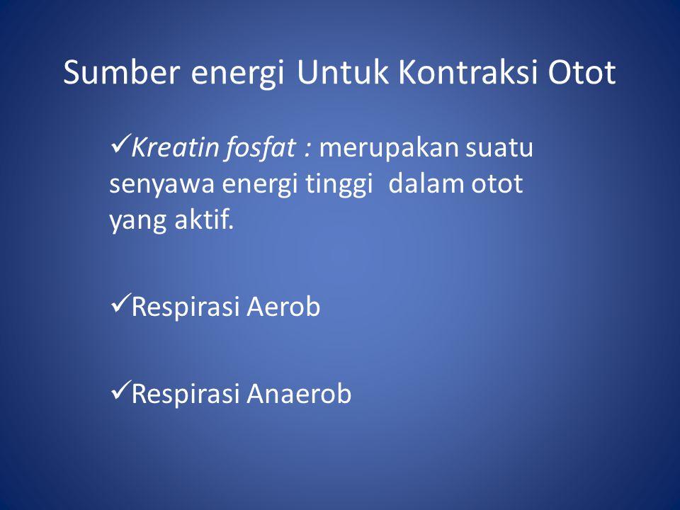 Sumber energi Untuk Kontraksi Otot Kreatin fosfat : merupakan suatu senyawa energi tinggi dalam otot yang aktif. Respirasi Aerob Respirasi Anaerob