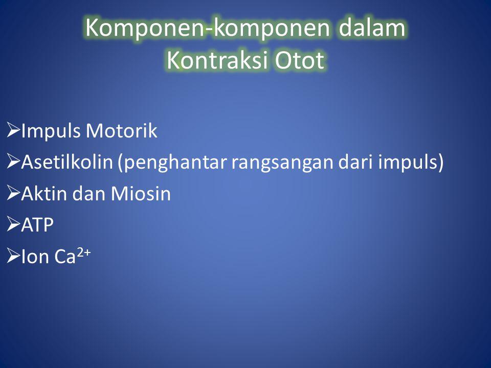  Impuls Motorik  Asetilkolin (penghantar rangsangan dari impuls)  Aktin dan Miosin  ATP  Ion Ca 2+