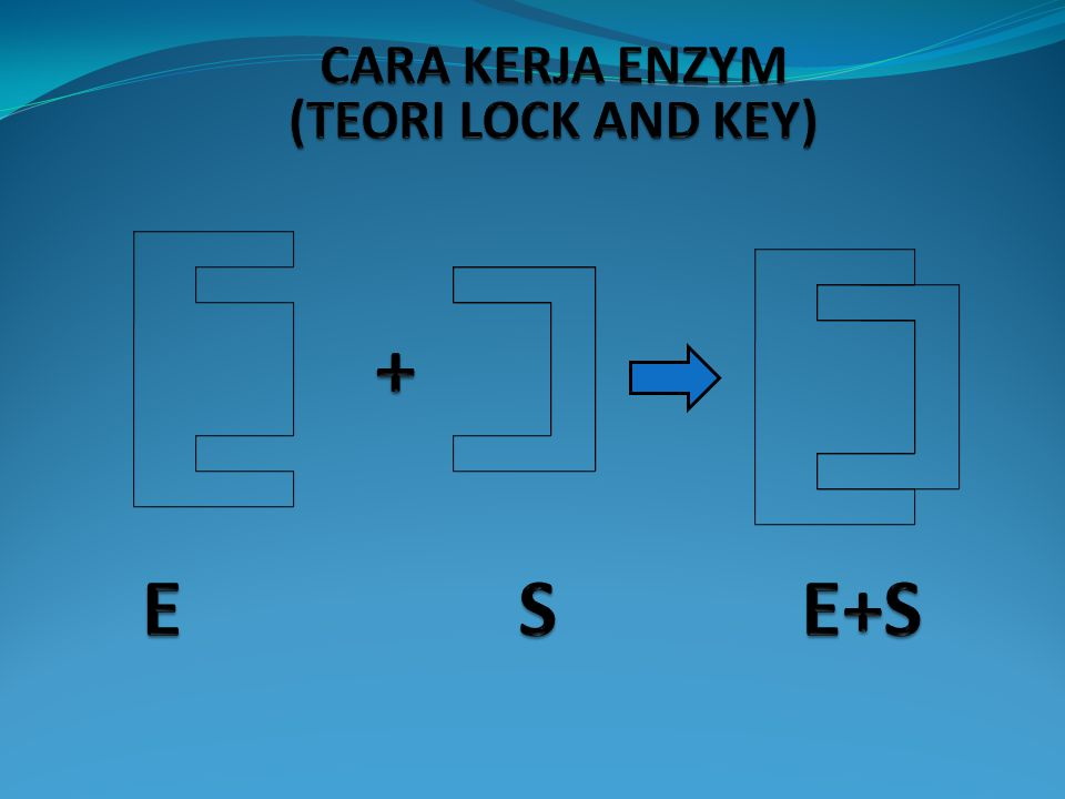 CARA KERJA ENZYM ADA 2 TEORI MENGENAI CARA KERJA ENZYM YAITU : 1.TEORI LOCK AND KEY ( GEMBOK DAN ANAK KUNCI ) 2. TEORI INDUCED FIT (COCOK TERINDUKSI)
