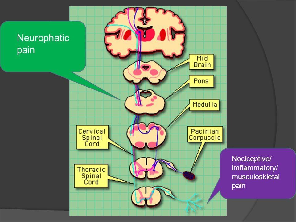 Nociceptive/ imflammatory/ musculoskletal pain Neurophatic pain