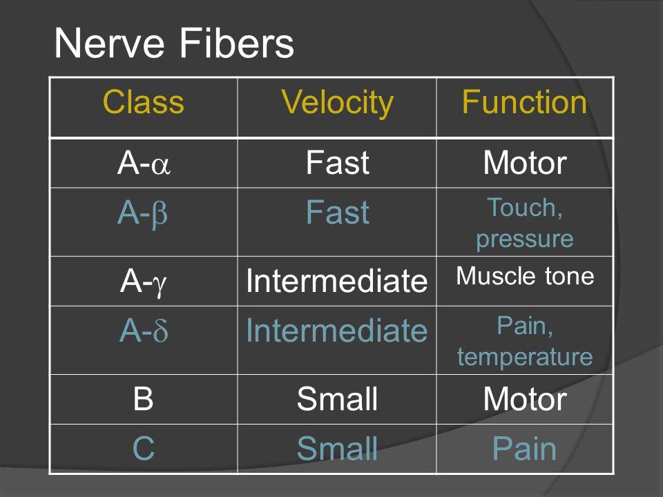 Nerve Fibers ClassVelocityFunction A-  FastMotor A-  Fast Touch, pressure A-  Intermediate Muscle tone A-  Intermediate Pain, temperature BSmallMotor CSmallPain