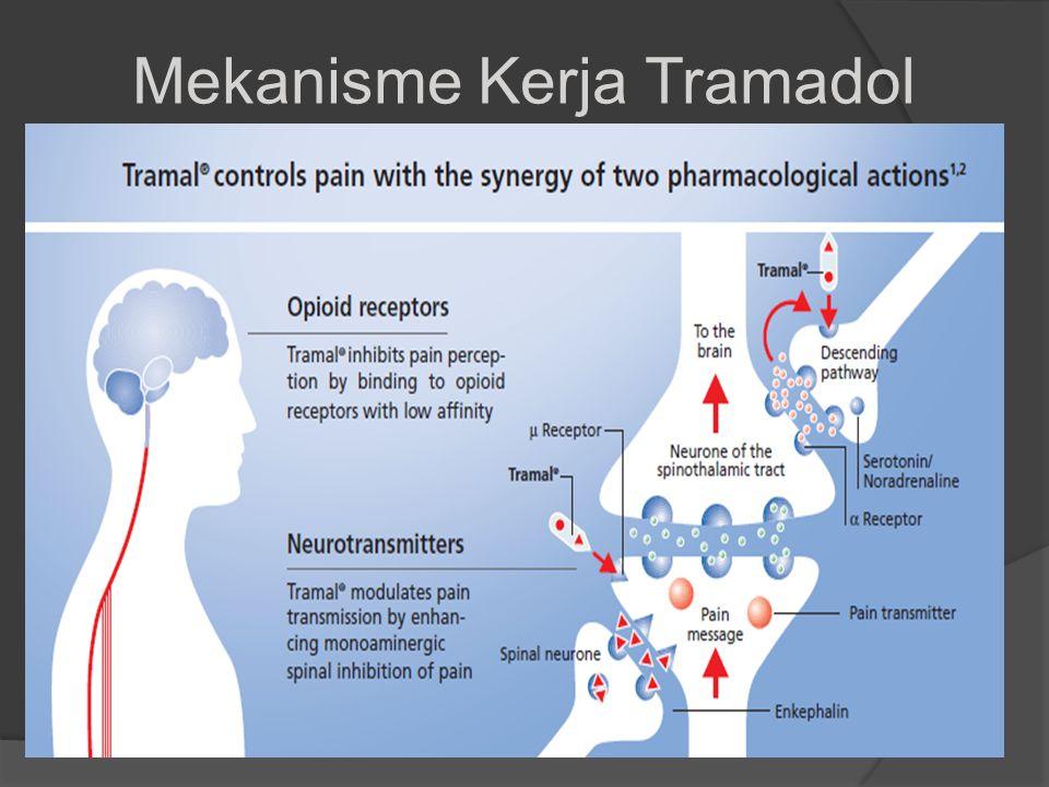 Serotonin/Noradrenalin µ-Receptor Menuju Otak Descending pathway Neuron dari saluran spinothalamic Transmiter nyeri Rangsang Nyeri Spinal neuron Enkephalin 22 -Receptor Tramadol Mekanisme Kerja Tramadol