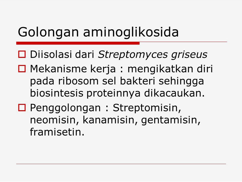 Golongan aminoglikosida  Diisolasi dari Streptomyces griseus  Mekanisme kerja : mengikatkan diri pada ribosom sel bakteri sehingga biosintesis prote