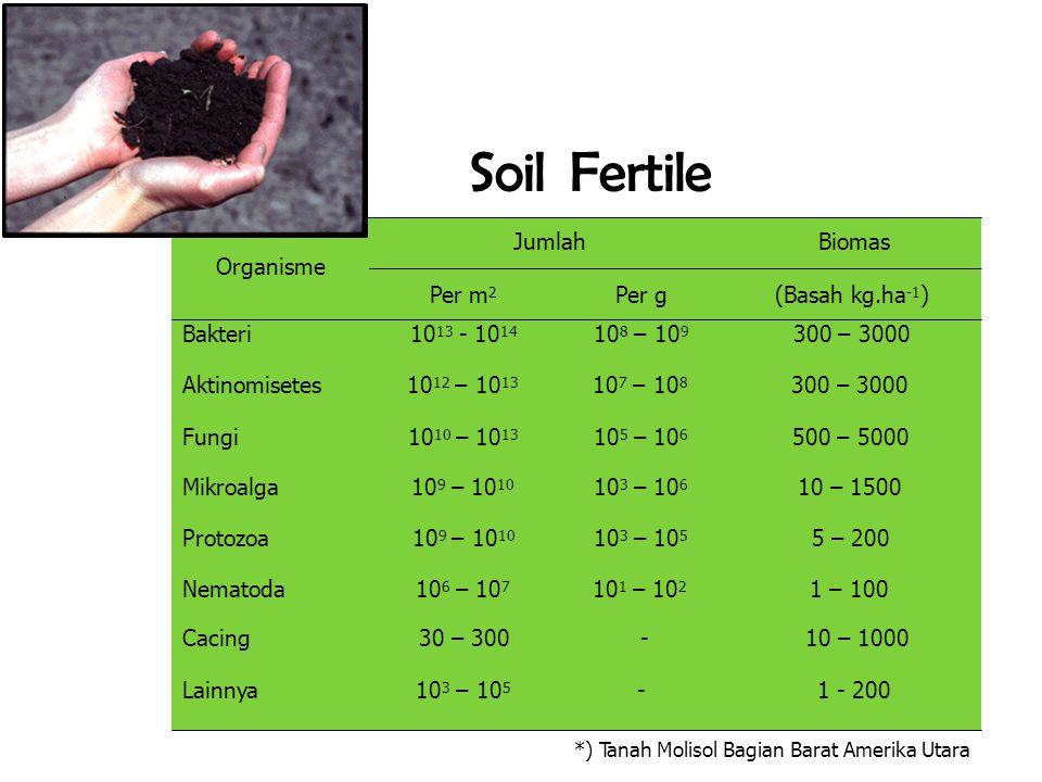 *) Tanah Molisol Bagian Barat Amerika Utara Soil Fertile Jumlah Biomas Organisme Per m 2 Per g (Basah kg.ha -1 ) Bakteri 10 13 - 10 14 10 8 – 10 9 300 – 3000 Aktinomisetes 10 12 – 10 13 10 7 – 10 8 300 – 3000 Fungi 10 10 – 10 13 10 5 – 10 6 500 – 5000 Mikroalga 10 9 – 10 10 10 3 – 10 6 10 – 1500 Protozoa 10 9 – 10 10 10 3 – 10 5 5 – 200 Nematoda 10 6 – 10 7 10 1 – 10 2 1 – 100 Cacing 30 – 300 - 10 – 1000 Lainnya 10 3 – 10 5 - 1 - 200