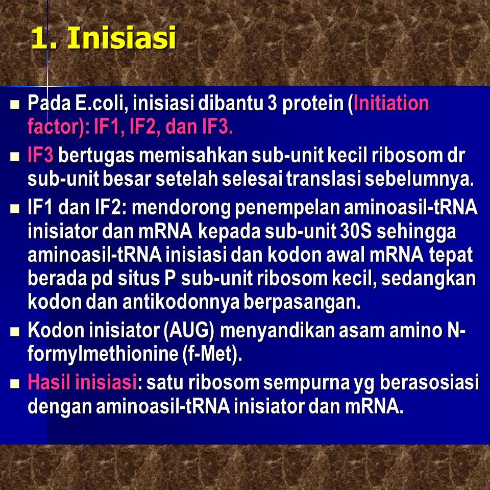 1. Inisiasi Pada E.coli, inisiasi dibantu 3 protein (Initiation factor): IF1, IF2, dan IF3. Pada E.coli, inisiasi dibantu 3 protein (Initiation factor