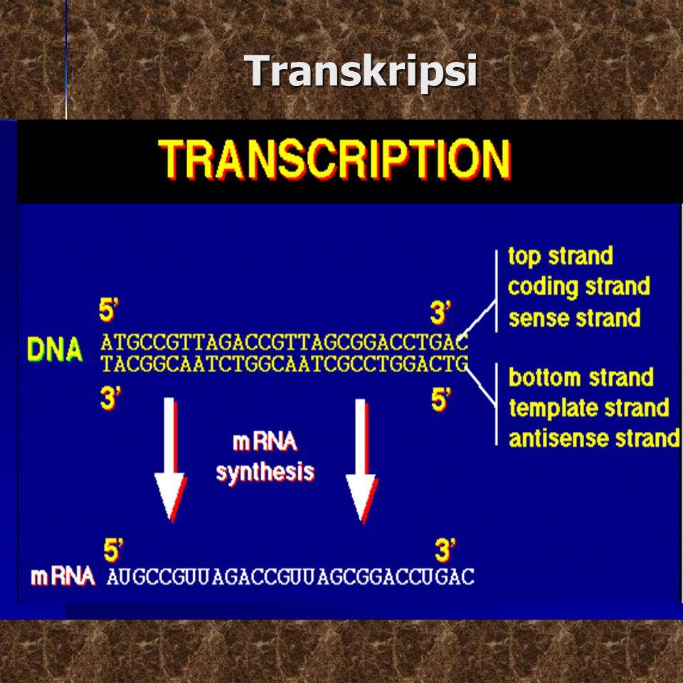 Transkripsi