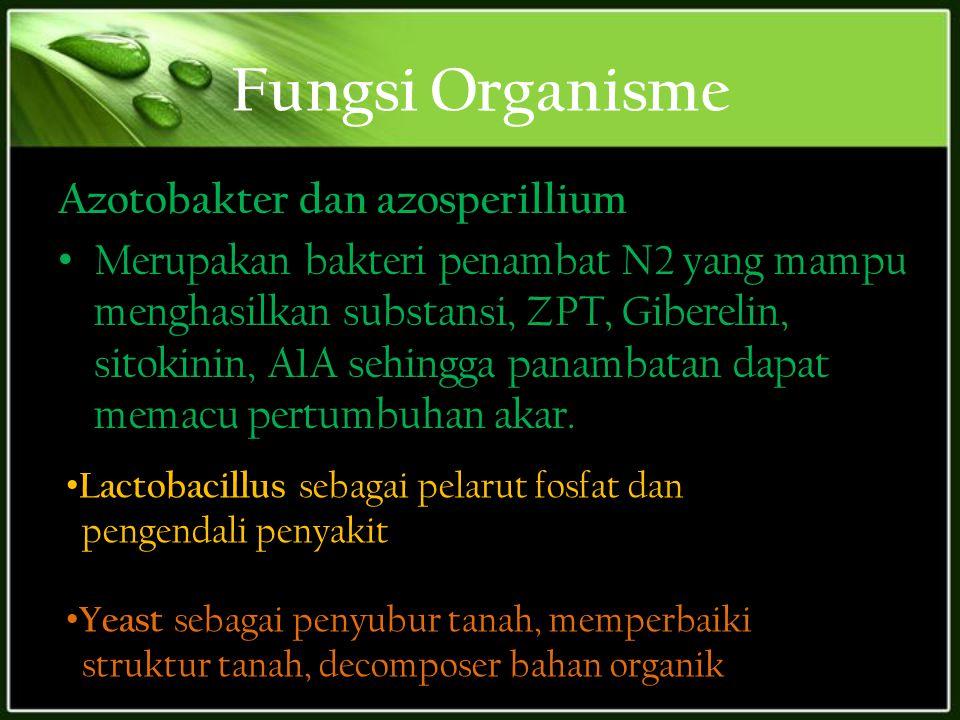 Fungsi Organisme Azotobakter dan azosperillium Merupakan bakteri penambat N2 yang mampu menghasilkan substansi, ZPT, Giberelin, sitokinin, A1A sehingg