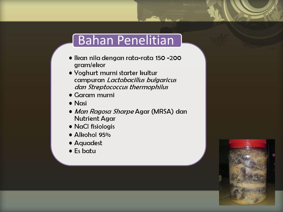 Ikan nila dengan rata-rata 150 -200 gram/ekor Yoghurt murni starter kultur campuran Lactobacillus bulgaricus dan Streptococcus thermophilus Garam murn