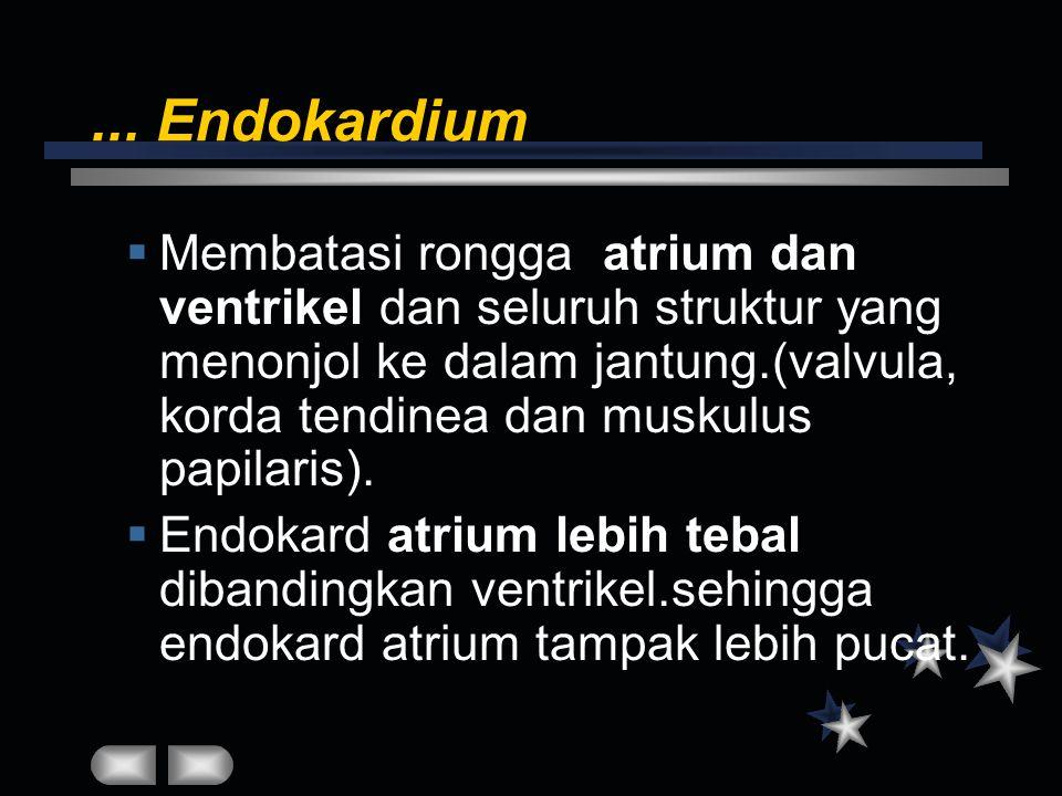 ... Endokardium  Membatasi rongga atrium dan ventrikel dan seluruh struktur yang menonjol ke dalam jantung.(valvula, korda tendinea dan muskulus papi
