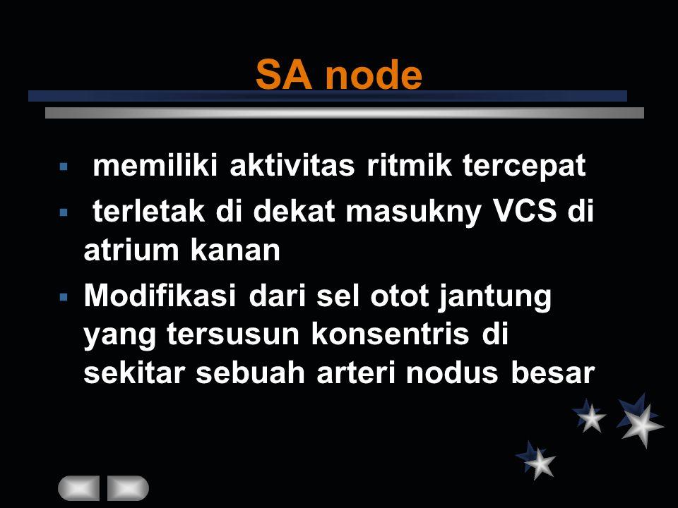 SA node  memiliki aktivitas ritmik tercepat  terletak di dekat masukny VCS di atrium kanan  Modifikasi dari sel otot jantung yang tersusun konsentr