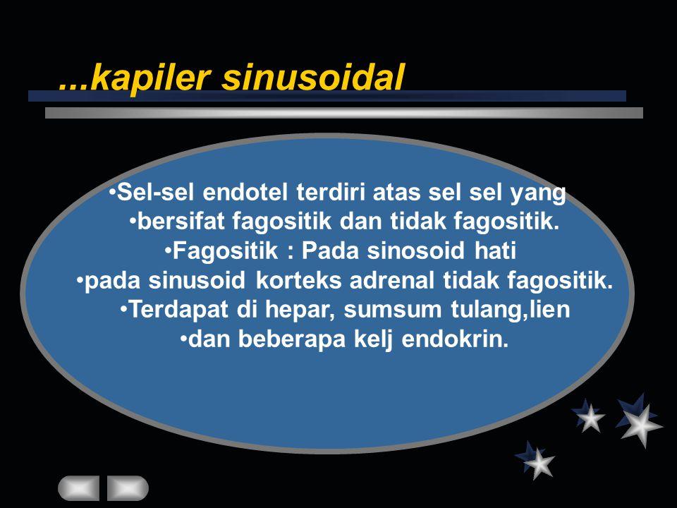 ...kapiler sinusoidal Sel-sel endotel terdiri atas sel sel yang bersifat fagositik dan tidak fagositik. Fagositik : Pada sinosoid hati pada sinusoid k