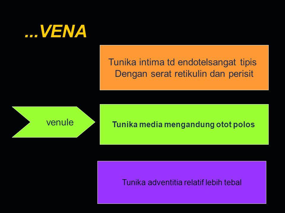 ...VENA Tunika intima td endotelsangat tipis Dengan serat retikulin dan perisit venule Tunika media mengandung otot polos Tunika adventitia relatif le