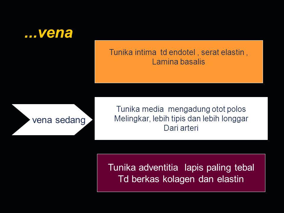 ...vena Tunika intima td endotel, serat elastin, Lamina basalis vena sedang Tunika media mengadung otot polos Melingkar, lebih tipis dan lebih longgar