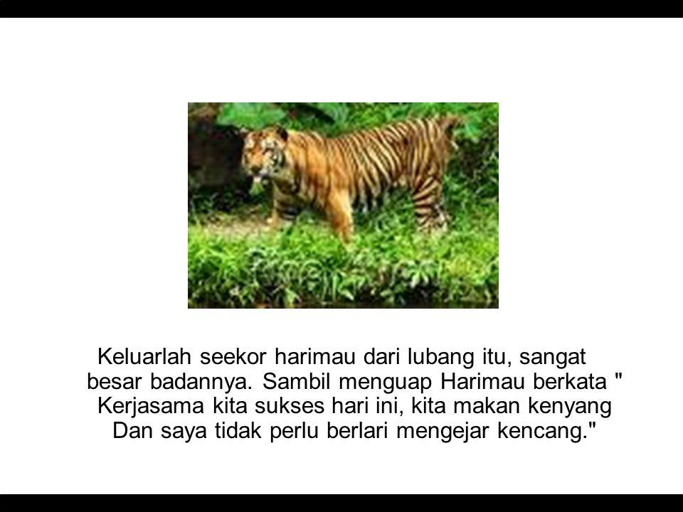 Keluarlah seekor harimau dari lubang itu, sangat besar badannya. Sambil menguap Harimau berkata