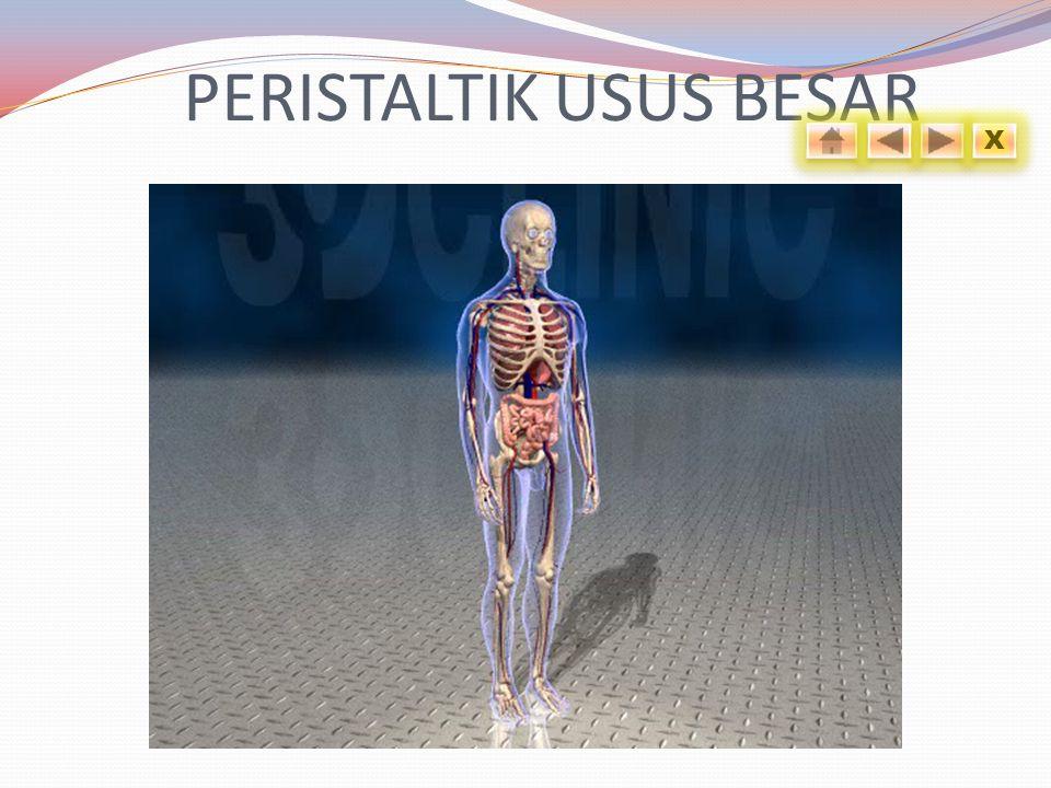 PERISTALTIK USUS BESAR