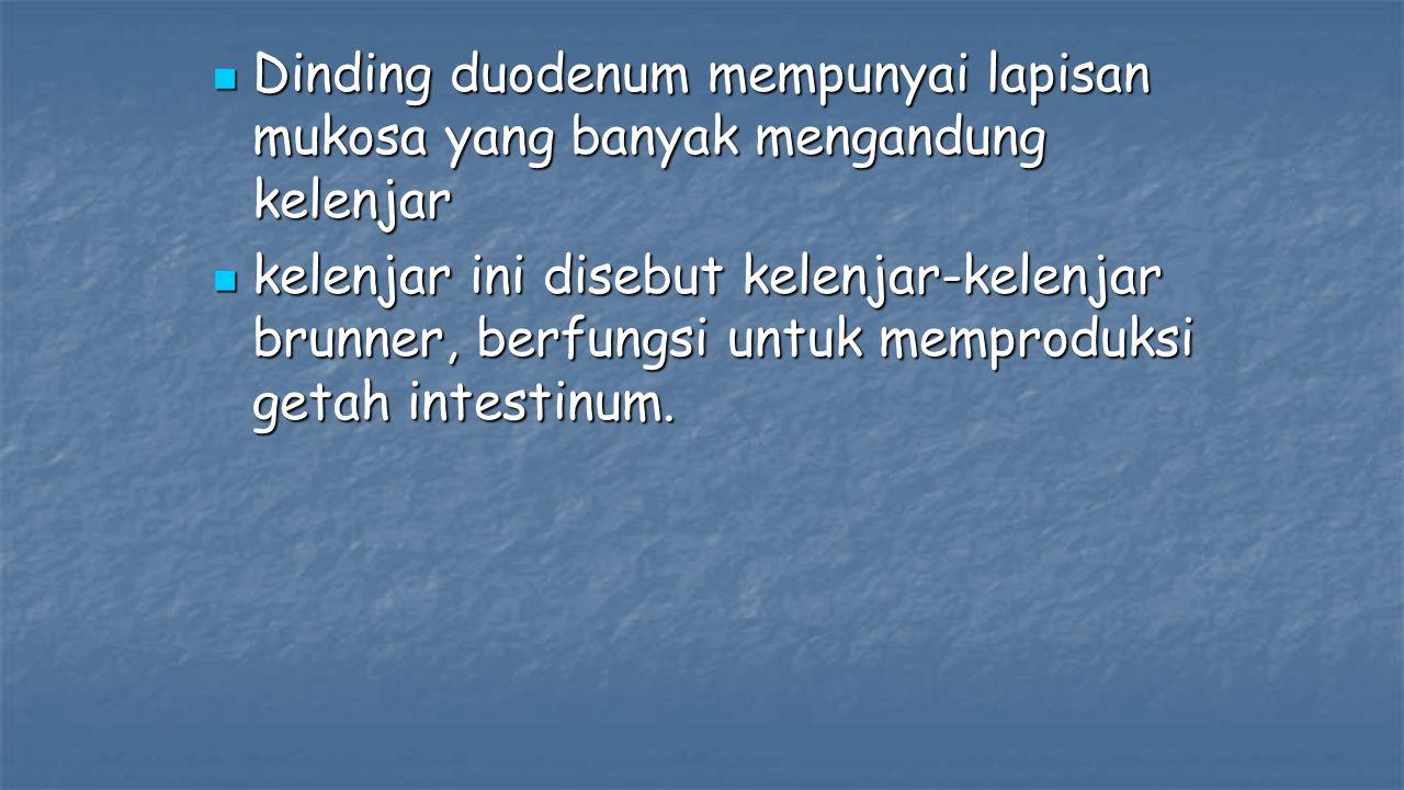 Dinding duodenum mempunyai lapisan mukosa yang banyak mengandung kelenjar Dinding duodenum mempunyai lapisan mukosa yang banyak mengandung kelenjar kelenjar ini disebut kelenjar-kelenjar brunner, berfungsi untuk memproduksi getah intestinum.