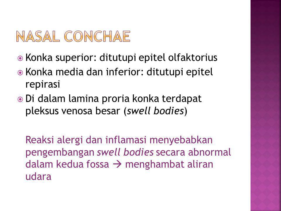  Konka superior: ditutupi epitel olfaktorius  Konka media dan inferior: ditutupi epitel repirasi  Di dalam lamina proria konka terdapat pleksus ven