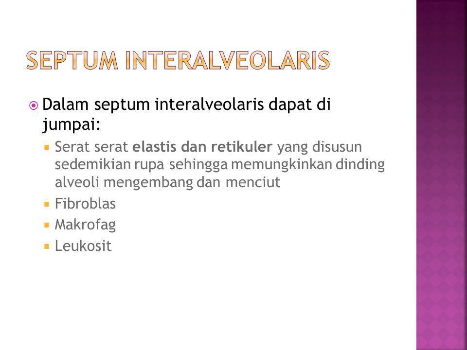  Dalam septum interalveolaris dapat di jumpai:  Serat serat elastis dan retikuler yang disusun sedemikian rupa sehingga memungkinkan dinding alveoli