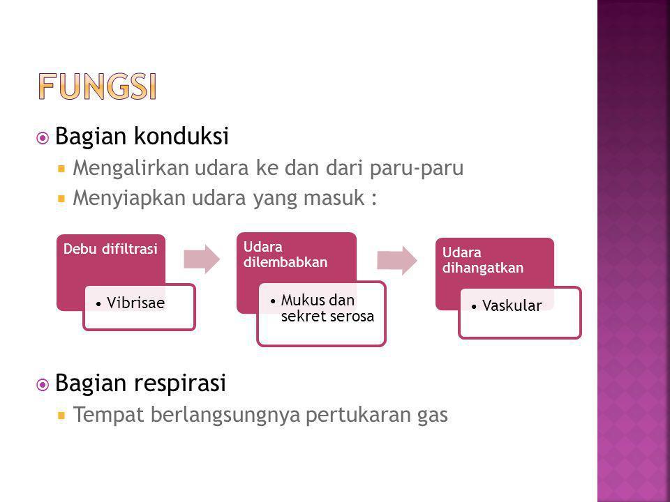  Bagian konduksi  Mengalirkan udara ke dan dari paru-paru  Menyiapkan udara yang masuk :  Bagian respirasi  Tempat berlangsungnya pertukaran gas